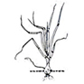 Oignon - Bulbe 2-3 cm