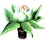 Pommier - Les sépales laissent voir les pétales