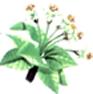 Pommier - Chute des derniers pétales