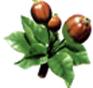 Pommier - Grossissement des fruits