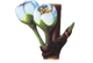 Prunier - Hauteur de la plante : 20 – 30 cm