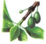 Prunier - Fin du cycle végétatif