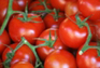 Tomates - Programme Foliaire