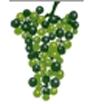 Vigne - L : Début Véraison