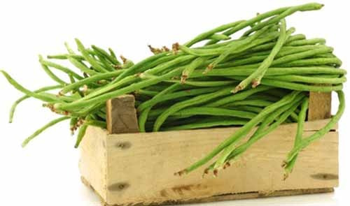 Programme Haricots verts